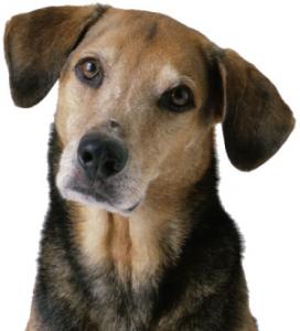 Глоби за стопани с куче без чип
